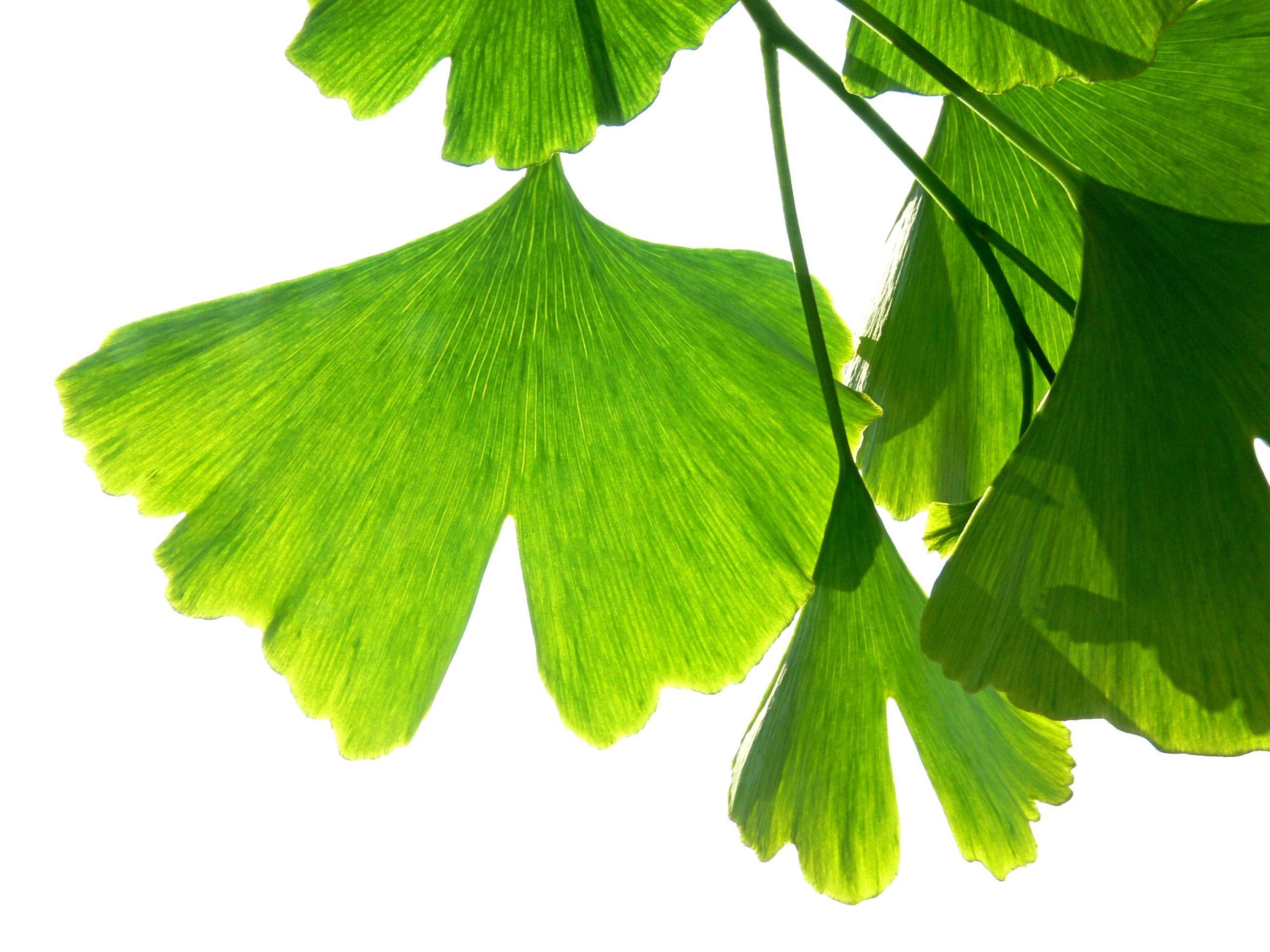Background_leaf